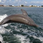 Our dolphin sighting on little toot