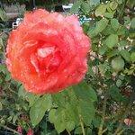 Le jardin de Mme Piemont