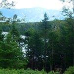 Glimpse of lake