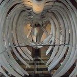 esqueleto da baleia