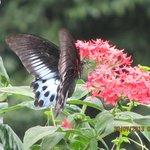 Butterflies everywhere..!!!