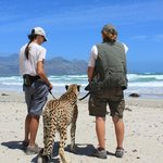 Cheetah Beach Walk