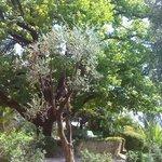 La beauté d'arbres centenaires vue d'un banc sous un figuier