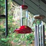 One of many humingbird feeders....