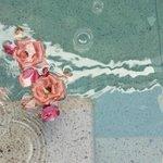 Rose in piscina