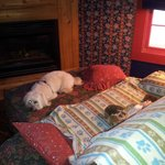 inside the cabin...teddy's blanket covers the nice couch