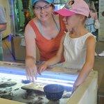 Santa Monica Pier Aquarium Foto