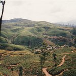 close to ratnapura.  tea fields