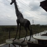 giraffe on the terrace