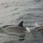 Dolphin Mum and Baby