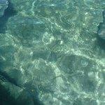 Sting rays underwater