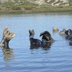 Seals posing