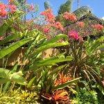 beautiful gardens in every villa