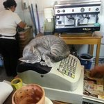 cat sleeping on the cash register at Fernando's