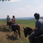 Overland Morgan Horse Farm