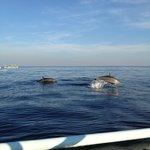 Dolphin sighting off Lovina Beach