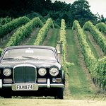 Relax on a private wine tour tailored just for you