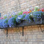Flowers around every corner
