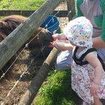 My daughter feeding the pony