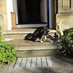 Housecat Bunty
