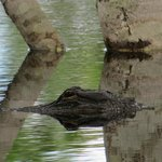 Another gator