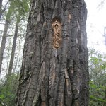 tree carvings by elmer guntherson