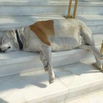 The hotel dog who spends the time sleeping on the steps
