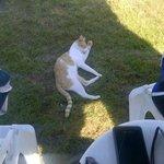 Il gatto del residence