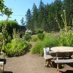 Hollyhock's famous garden