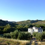 Casa Olea, olive groves and mountains
