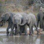 Unglaubliche Safari-Eindrücke!