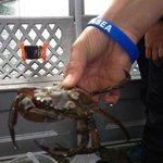 Bangor pier ace day for kids crab fishing