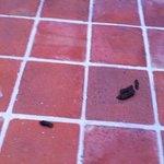 Terraza de la piscina con sorpresa de perro