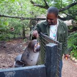 Our guide Tony feeding a Tapir