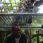 Tony feeding a Jaguar?