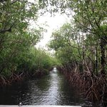 A stretch of mangrove lining the waterway