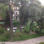 garden!
