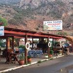 Fish Tavern To Thalami