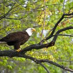 Discover the James Bald Eagle Tours