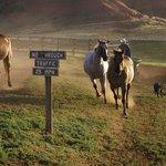 Near the Ranch House