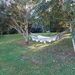 Relaxing in the hammock in the garden