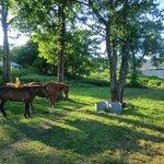 小さな牧場もある