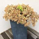 Plante fanée