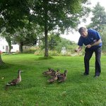 I have adopted these ducks as my own!