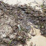 Algas y basura en la orilla de la playa