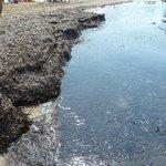 Montón de algas en playa Arenal Calpe 220813