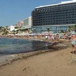 Situación de la peor zona de algas Playa Arenal Calpe 220813