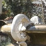 Birdbath