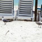 Seagulls everywhere on the beach.Be careful.