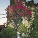 Αναρριχητικά φυτά καλύπτουν τις εξωτερικές επιφάνειες του ξενοδοχείου!